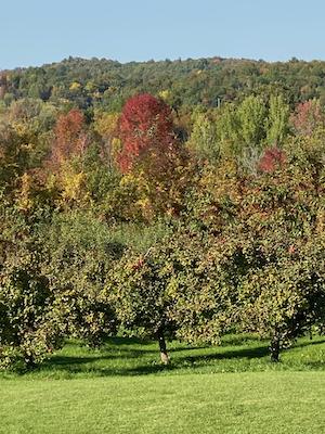 fall foliage at woodman hill orchard